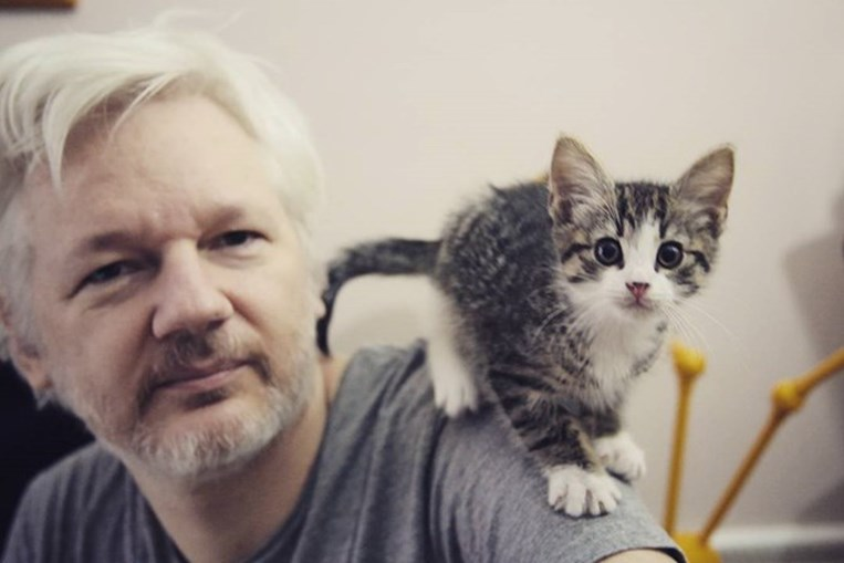 Gato de Julian Assange foi retirado da embaixada do Equador